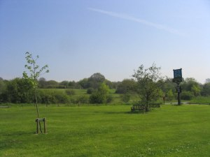 Little Warley Common